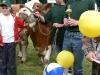 starsi-kravy2-misto