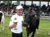 starsi-kravy6